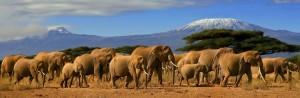 african-safari-kenya