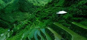 Rice-Fields1