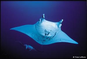 Tahiti_Dive_Sites1