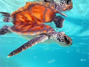 mozirs_turtle11
