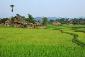 Vietnam-nature1