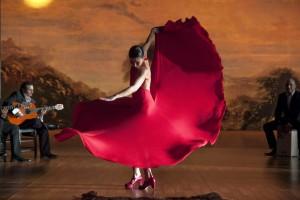 flamenco-flamenco-31
