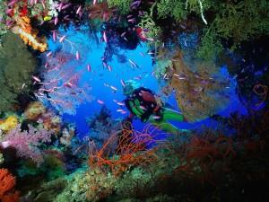 scuba_diver-Vietnam1