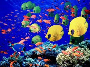 maldives_marine_life1