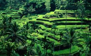 Bali31