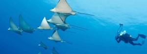 Diving-in-Seychelles-1