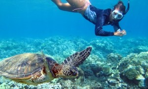 Swimming-with-Sea-Turtles1