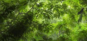 Tijuca-Forest1
