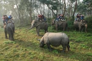Safari-in-Chitwan-National-Park1