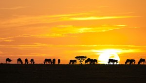Sunset-in-Tanzania1