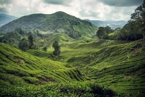 Malaysia.-Cameron-Highlands11