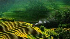 Rice-Fields1