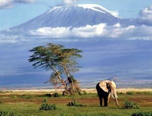 Tanzania_Safari_Of_Tanzania1