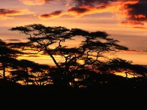 Twilight_Over_Tanzania_Africa1