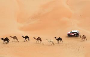 Abu-Dhabi-Desert1