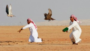 JJC12_03FalconryCompetition-2-crop1