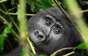 Bwindi-Impenetrable-National-Park2