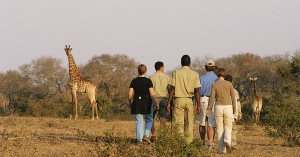 Elephant-Plains-Lodge-Sabi-Sands-Game-Walk1