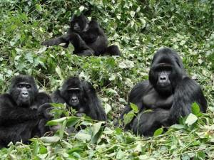 The-Gorilla-Family1