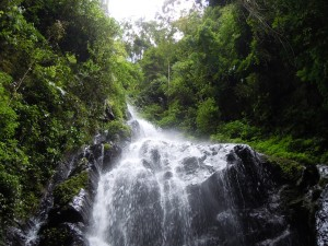 Waterfall-in-Bwindi1