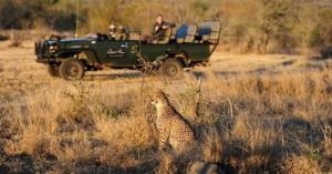 Wildlife-Safari-Sabi-Sands-Cheetah-Plains-Lodge1