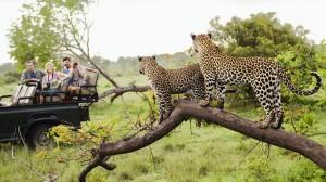 Close-to-Africas-Wildlife2