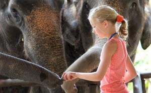 A-Unique-Elephant-Experience31