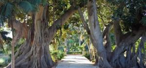 Hastings-Gardens-Malta1
