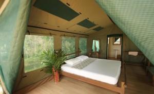 Rainforest-Camp21