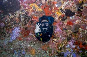 Similan-Islands-Live-Aboard1