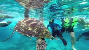 Similan-diving111
