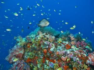 Similan-diving21