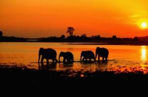 Sri-Lanka-Elefants11