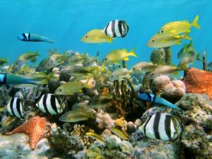 Punta-Cana-Diving1