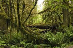 temperate-rainforest-georgette-douwma1