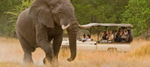 african-safari2