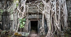 Angkor Wat Cambodia. Ta Prom Khmer ancient Buddhist temple in ju