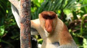 Borneo-animals11