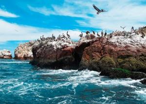 Ballestas-Islands11