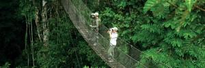 Canopy-walk1
