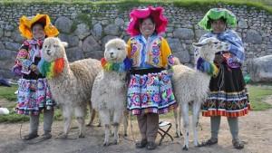 Alpaca Mammal Inca Lama Andean Quechua Peru