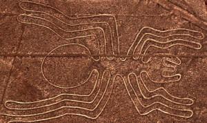 Nazca-Spider1