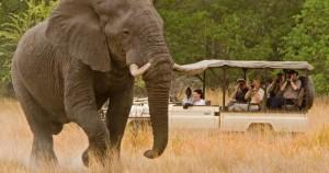 african-safari-660x3481